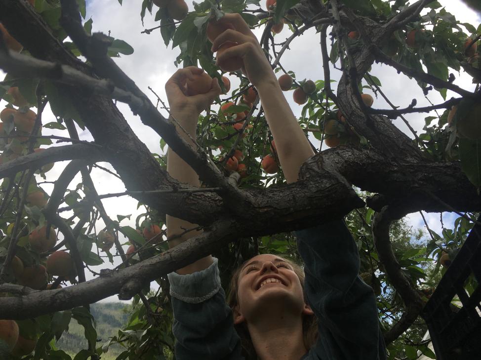Wren Gleaning